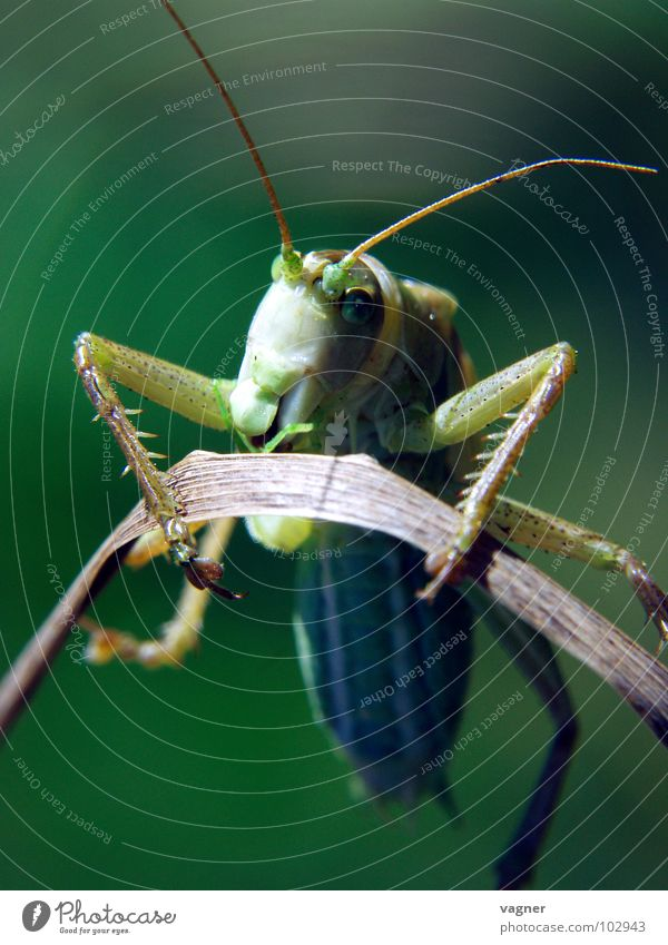 Nature Summer Electricity Curiosity Locust Saxony Erz Mountains
