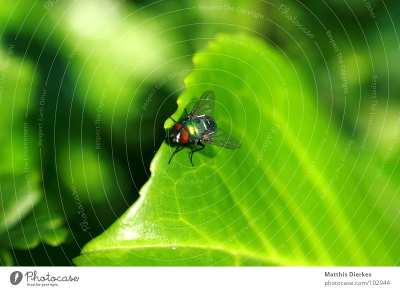 Nature Green Tree Summer Animal Leaf Small Flying Wait Fly Beginning Wing Break Cleaning Symbols and metaphors Living thing