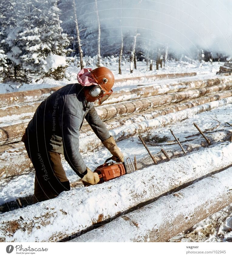 White Winter Snow Wood Tree Craft (trade) Tree trunk Working man Forestry Helmet Saw Protective clothing Power Saw Saftey goggles