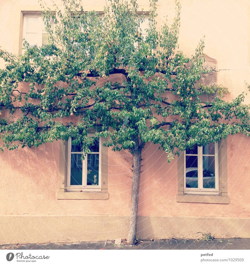 Domestic Views XIII Living or residing Flat (apartment) House (Residential Structure) Tree Old town Wall (barrier) Wall (building) Facade Window Uniqueness