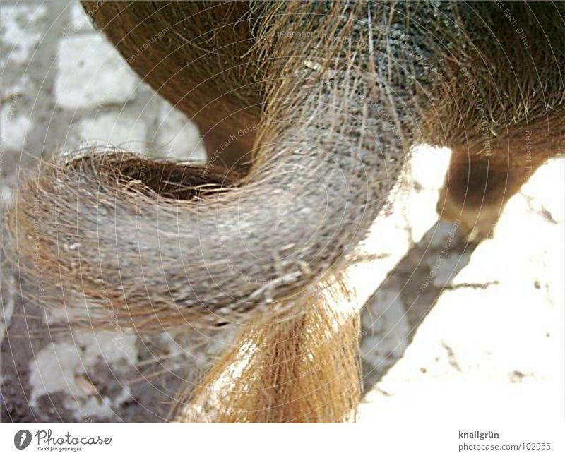 Animal Hair and hairstyles Brown Going Circle Cobblestones Mammal Swine Bristles