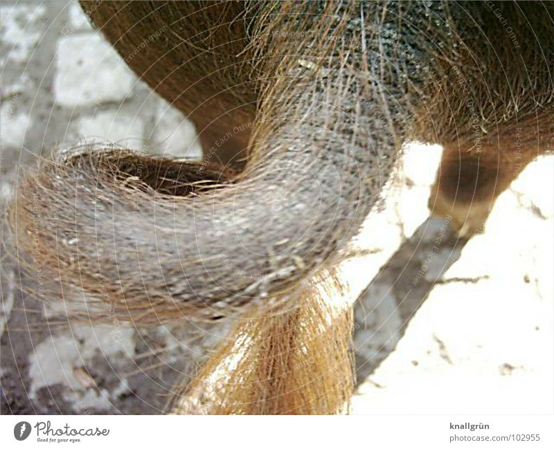 I'll be going... Swine Brown Animal Bristles Rear view Circle Going Mammal curly tail Cobblestones Hair and hairstyles pig's legs