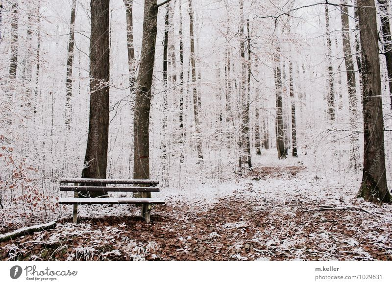 rest Snow Forest Bench Contentment Calm Loneliness Exhaustion Hope Inspiration Death Subdued colour Day