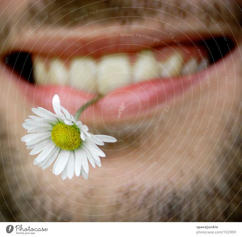 flower child Lips Facial hair Beard hair Flower Man Spring Summer Blossom Joie de vivre (Vitality) Hippie Daisy Summer feeling Plant Whimsical Joy Mouth Face