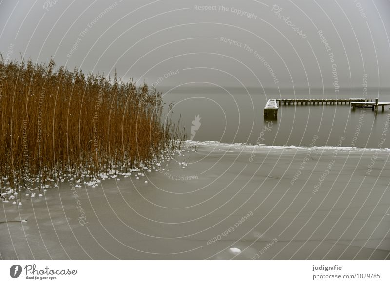Winter at the lake Environment Nature Landscape Water Climate Bad weather Ice Frost Coast Lakeside Jetty Natural Gloomy Gray Loneliness Cold Calm Common Reed