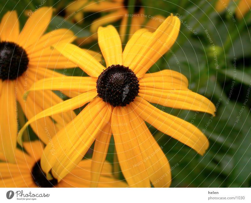 la floraison jaune Blossom Yellow Nature