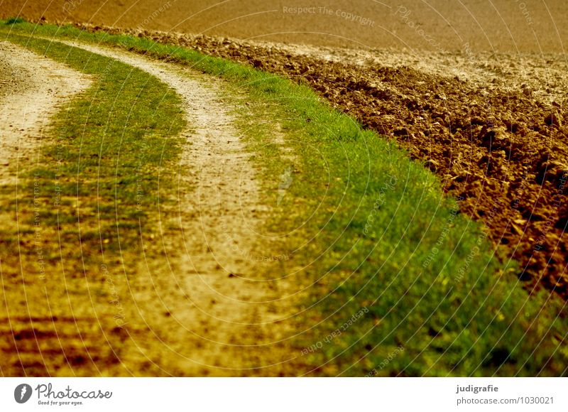 acre Agriculture Forestry Nature Plant Earth Field Lanes & trails Natural Brown Green Curve Tracks Grass Colour photo Exterior shot Deserted Day