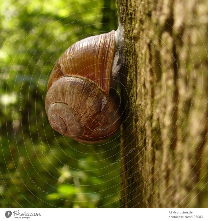 hey snail! Tree Forest Snail shell Retreat Withdraw Stick To hold on Green Wilderness Animal Plant Tree bark Tree trunk Macro (Extreme close-up) Close-up