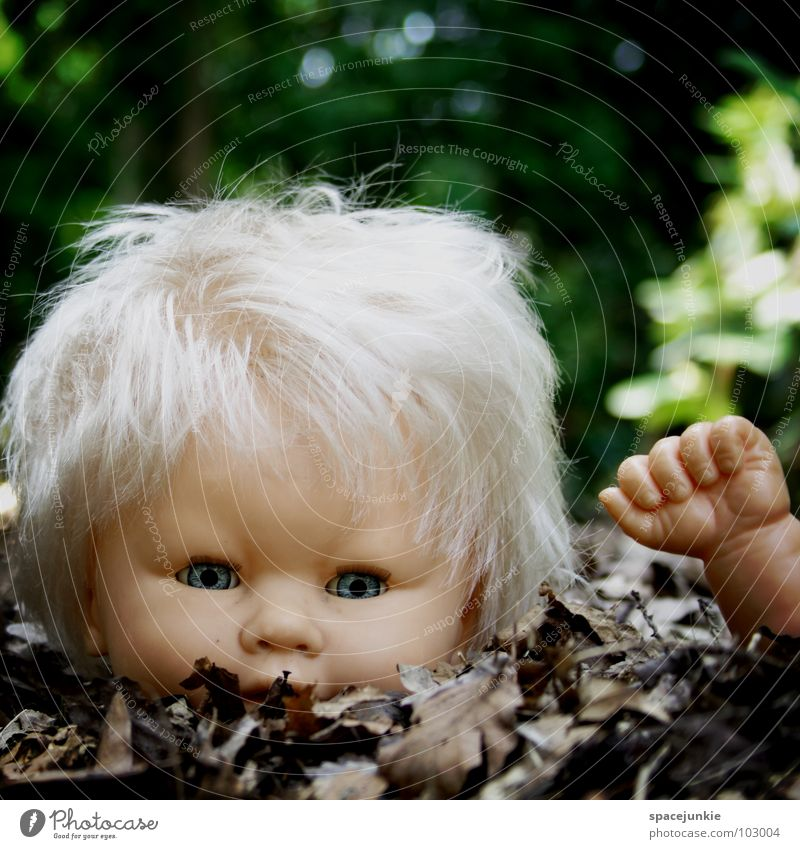 Blue Joy Leaf Eyes Loneliness Hair and hairstyles Fear Blonde Sweet Threat Toys Creepy Wild animal Cute Doll Whimsical