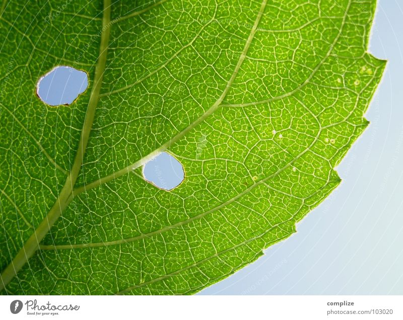Nature Tree Green Plant Corner Bushes Hollow Vessel Blue sky Vista Rachis Worm Sky blue