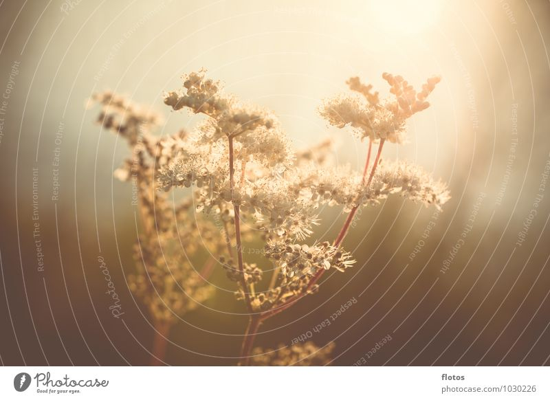 summer light Nature Sunlight Summer Plant Flower Grass Blossom Foliage plant Wild plant Meadow Field Exceptional Fresh Natural Beautiful Warmth Brown Yellow