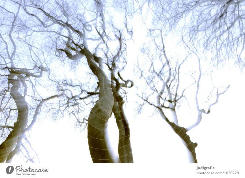 Book Environment Nature Sky Tree Forest Movement Exceptional Natural Moody Fear Dream Vertigo Giddy Alcohol-fueled Colour photo Exterior shot Experimental Blur