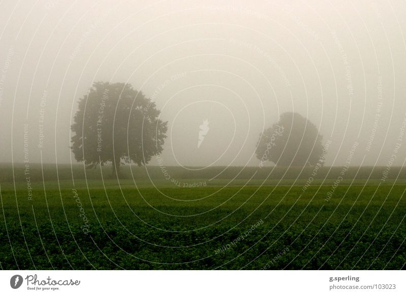 summer rain fog Tree Fog Green Gray Wet Summer Field Meadow Eerie Damp Rain