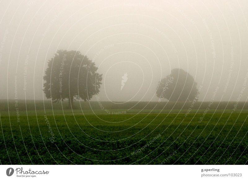 Tree Green Summer Meadow Gray Rain Field Fog Wet Damp Eerie