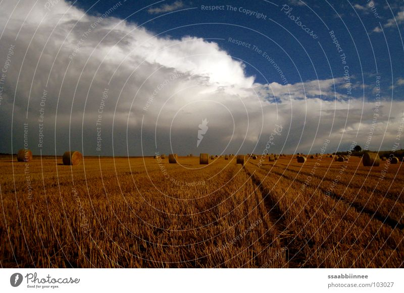 After the rain Bale of straw Clouds Summer Harvest Physics Fragrance Stubble field Sky Cornfield Warmth