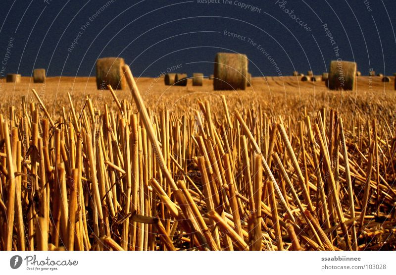 Sky Summer Dark Field Gold Grain Harvest Stopper Bale of straw