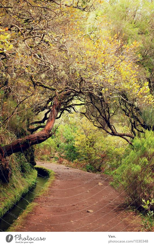 levada Nature Landscape Plant Autumn Tree Bushes Moss Forest Madeira Lanes & trails Brown Yellow Green Levada Colour photo Multicoloured Exterior shot Deserted