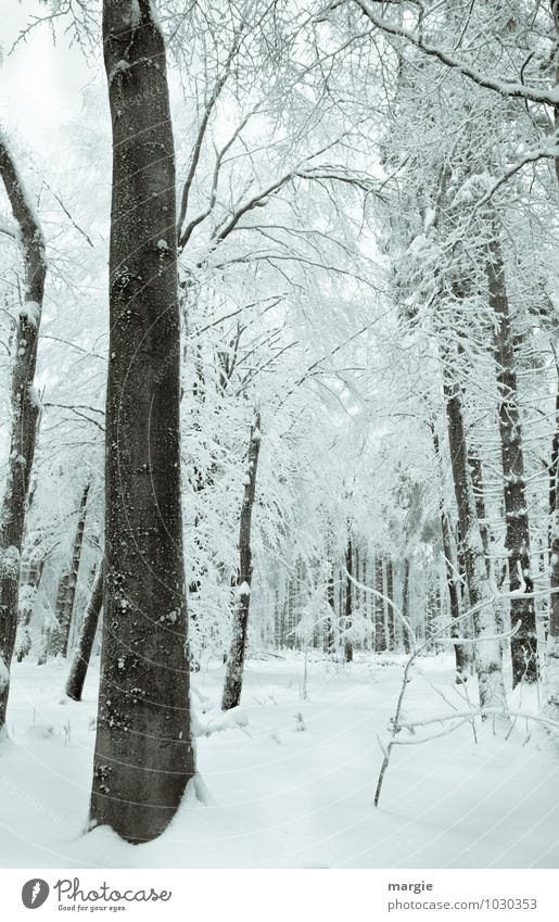Nature Vacation & Travel White Tree Relaxation Loneliness Landscape Calm Winter Forest Cold Environment Emotions Snow Wood Moody