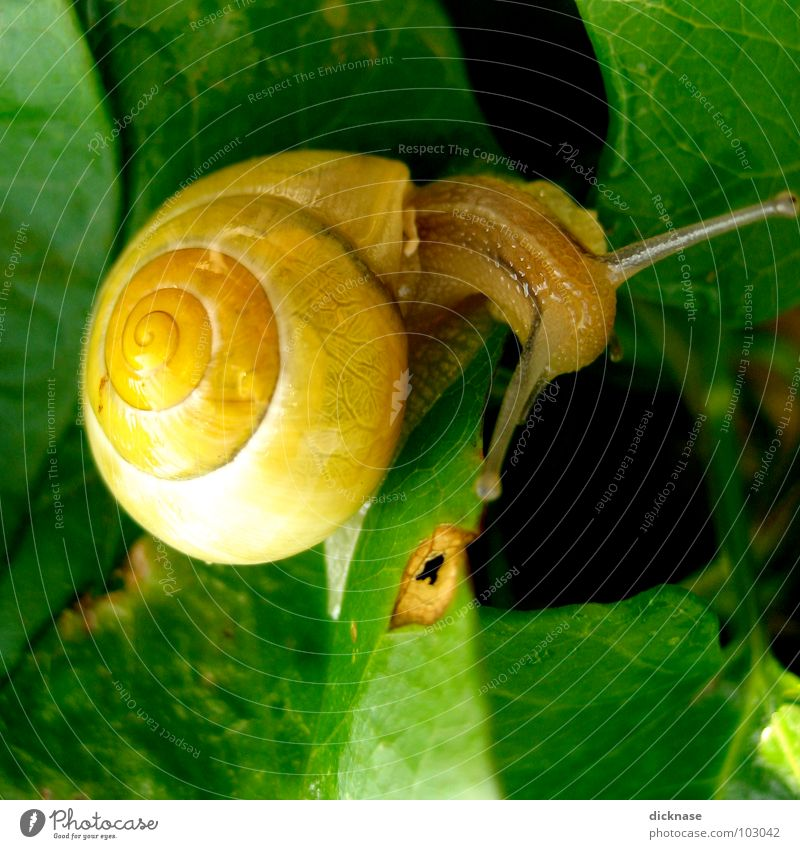 Green Summer Leaf House (Residential Structure) Animal Eyes Yellow Garden Brown Ear Transparent Snail Feeler Stick Camouflage Snail shell