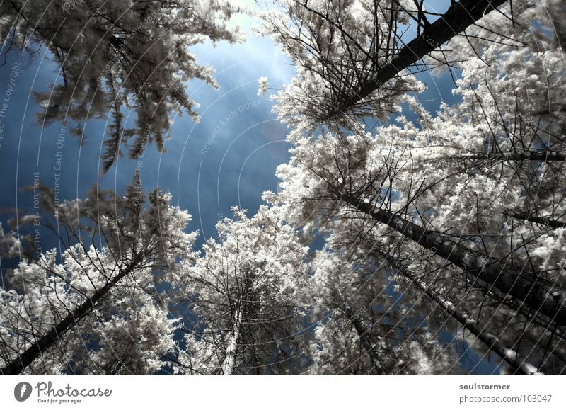 treetops Infrared White Infrared color Passenger train Black Red Clouds Grass Wayside Meadow Wood flour Wood effect Gorgeous Exceptional Dream Fence Tree Forest