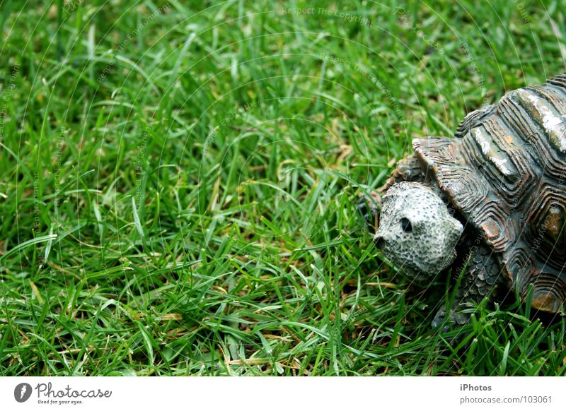 no hero - turtle! Turtle Animal Grass Green Meadow Zoo Reptiles Enclosure Pattern Furrow Living thing Mow the lawn Blade of grass Slowly Discover Juicy To feed