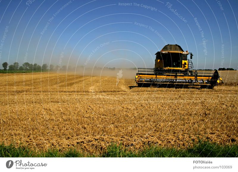 country life Field Combine Dust Cause a stir Barley Cornfield Farm worker Farmer Meadow Blade of grass Tree Grain harvest Hay bale Straw Bale of straw Blue sky