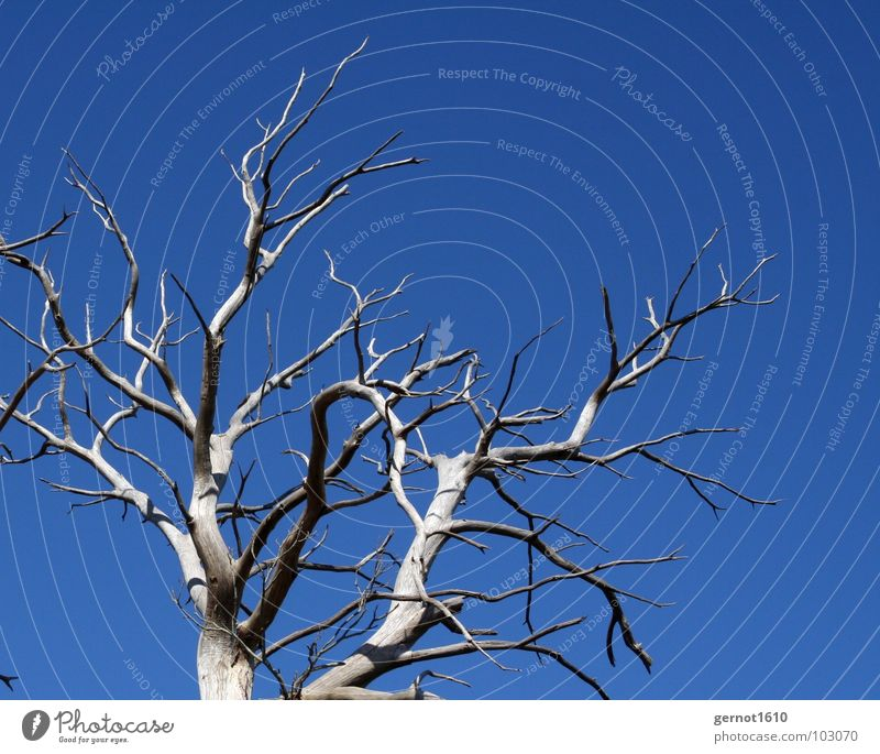 skeleton Tree Skeleton Dry Drought Leafless Physics Gray Black Pallid Bleached Death Ecological Disaster Hole in the ozone layer Sunlight Radiation Wood France