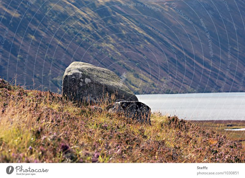 late summer Nature Landscape Plant Water Summer Bushes Wild plant Hill Coast Lakeside Scotland Northern Europe Stone Beautiful Moody Calm Vacation mood