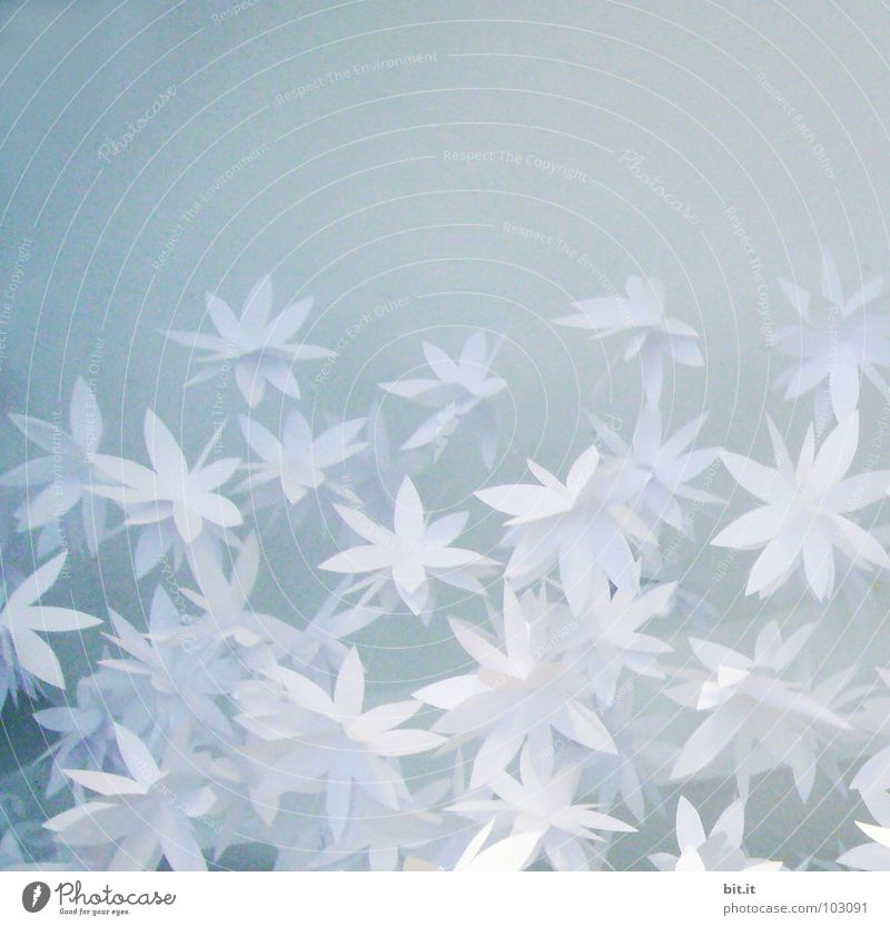 Blue White Flower Joy Winter Blossom Emotions Spring Snow Happy Art Feasts & Celebrations Design Ice Decoration Paper