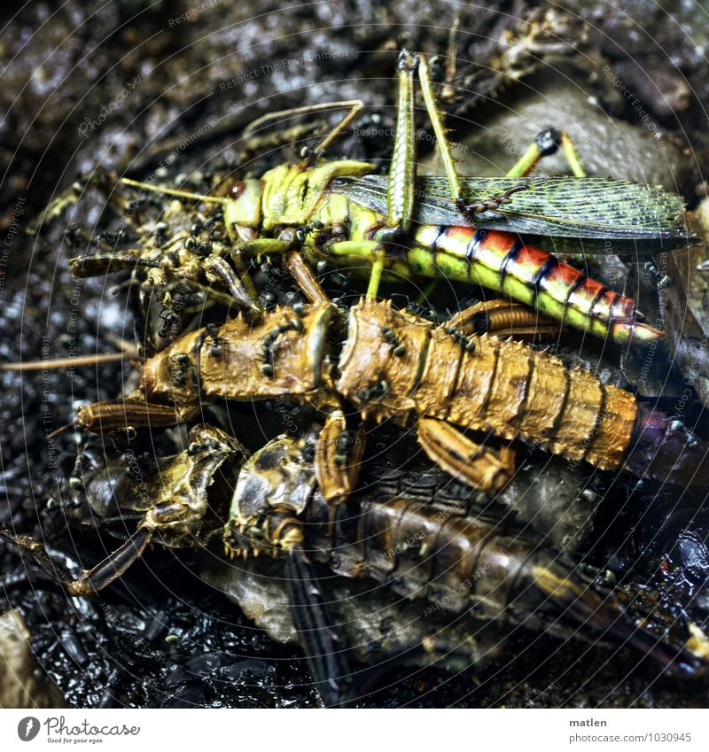 mass grave Animal 3 Group of animals Animal family Lie Brown Multicoloured Yellow Green Red Black Death Side by side Insect Ant Frightening Colour photo