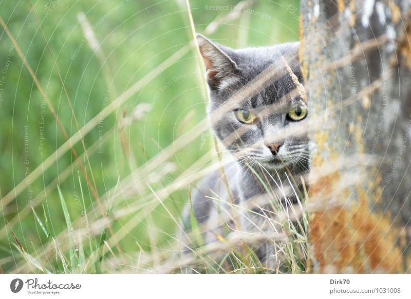 Cat Green White Animal Environment Yellow Wall (building) Life Grass Wall (barrier) Gray Garden Brown Wild Observe Threat