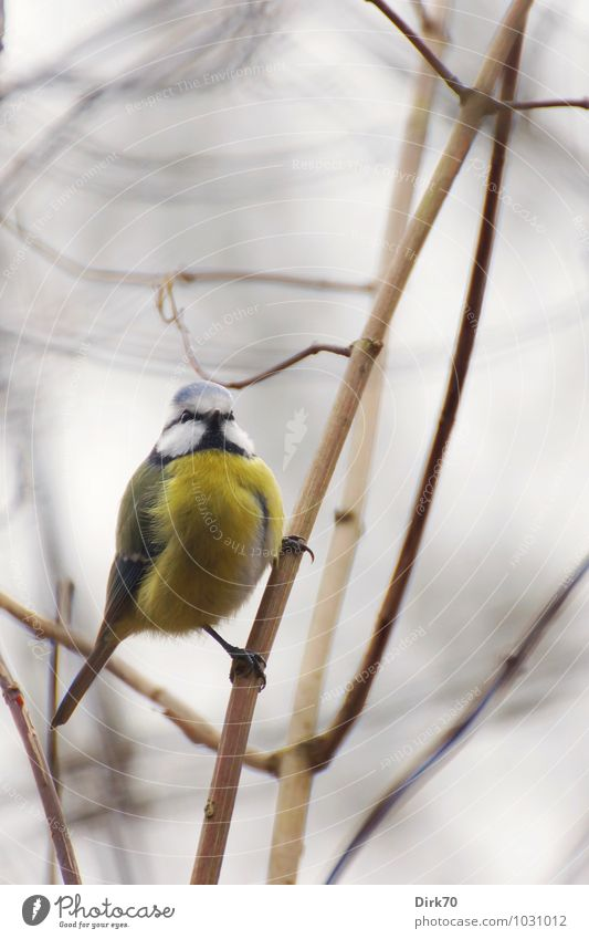 Nature Blue White Animal Winter Forest Cold Environment Yellow Gray Small Bright Bird Park Wild animal Bushes