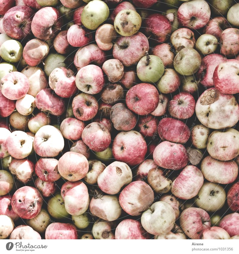 apple? Food Fruit Apple Nutrition Organic produce Vegetarian diet Round Juicy Sour Many Pink Red Poverty Quantity counter Surplus Spoiled Putrid Colour photo