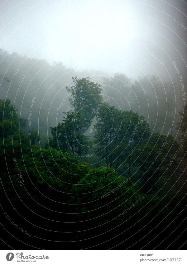 Tree Green Summer Loneliness Forest Dark Cold Sadness Rain Landscape Fog Grief Mysterious Hill Virgin forest Distress