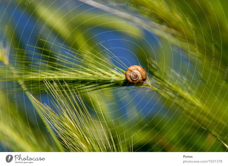Nature Blue Plant Beautiful Green Summer Calm Grass Natural Small Moody Brown Field Authentic Beautiful weather Protection