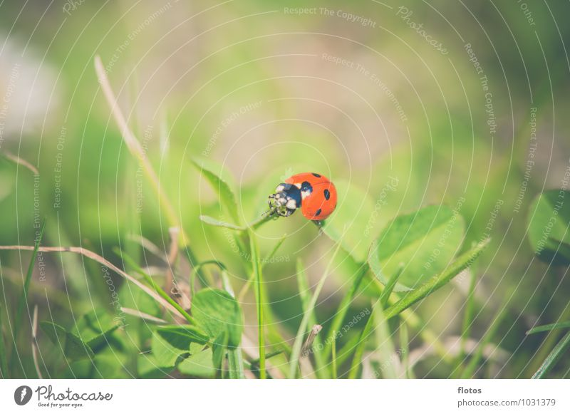 red-black Nature Summer Beautiful weather Grass Meadow Animal Wild animal Beetle Crawl Natural Brown Green Red Black Love of animals Calm Colour photo