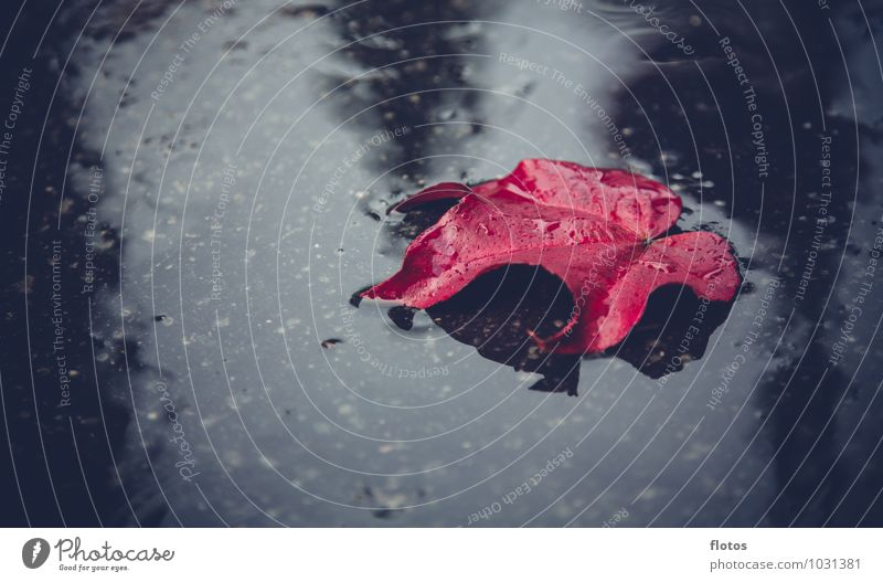 Nature Plant Water Loneliness Red Leaf Black Cold Sadness Autumn Emotions Natural Gray Rain Wet Grief