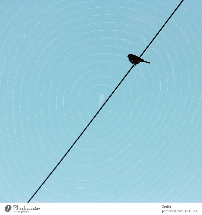 weird bird Nature Sky Cloudless sky Bird 1 bird Line Blue Queer fish Across Tilt Sit Life Silhouette Wire cable Copy Space Minimalistic Loneliness