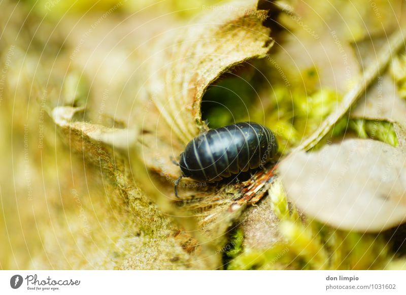 Nature Leaf Animal Forest Environment Autumn Natural Idyll Crawl Beetle To dry up Isopod