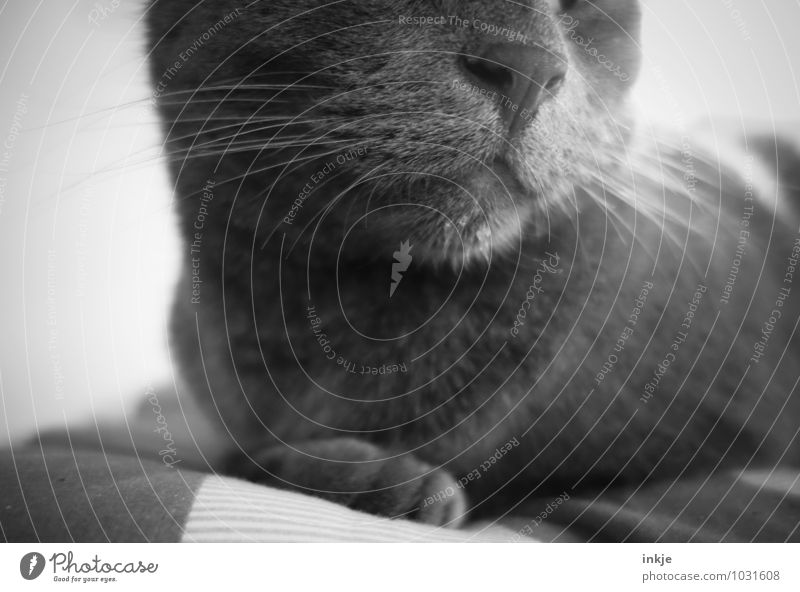 monsieur slobbered. Drops of water Pet Cat Animal face Whisker 1 Relaxation Crouch Lie Near Wet Gray Contentment Daub Slaver Black & white photo Interior shot