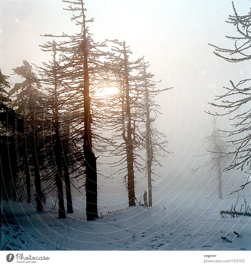 Erz Mountains Winter Forest Tree Fog Environmental pollution Acid rain Snow Evening