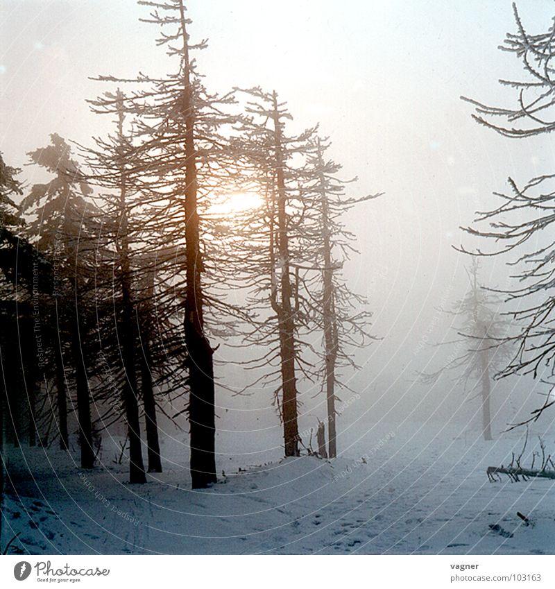 Tree Winter Forest Snow Fog Environmental pollution Acid rain