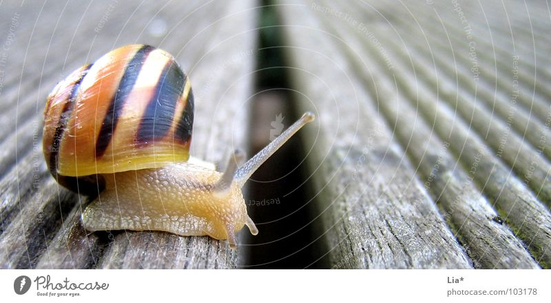 border transgression Animal Feeler Snail shell Barrier Break Slowly Crawl Gutter Border Border crossing Small Cute Balcony Concentrate Macro (Extreme close-up)