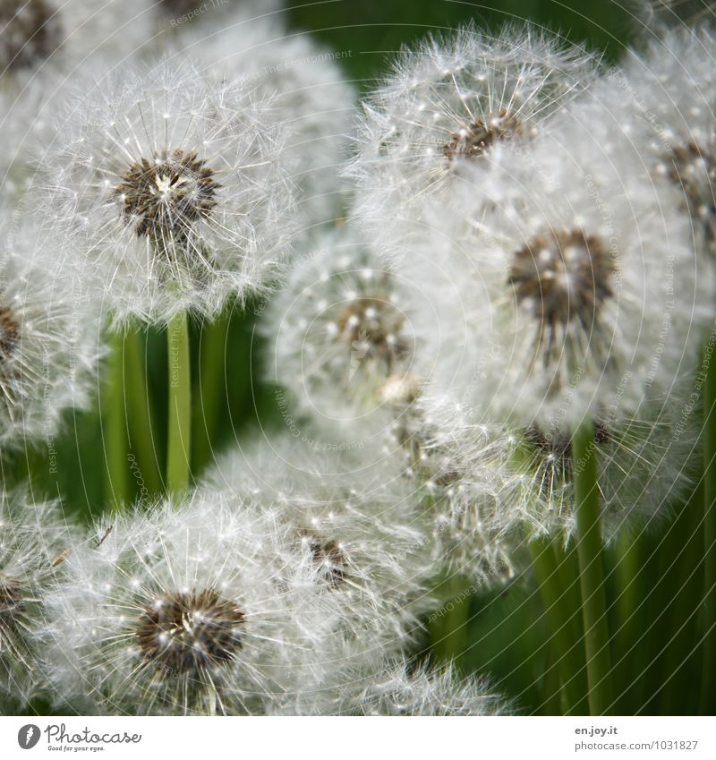 Nature Plant Green White Summer Flower Environment Life Meadow Blossom Spring Growth Happiness Joie de vivre (Vitality) Blossoming Transience