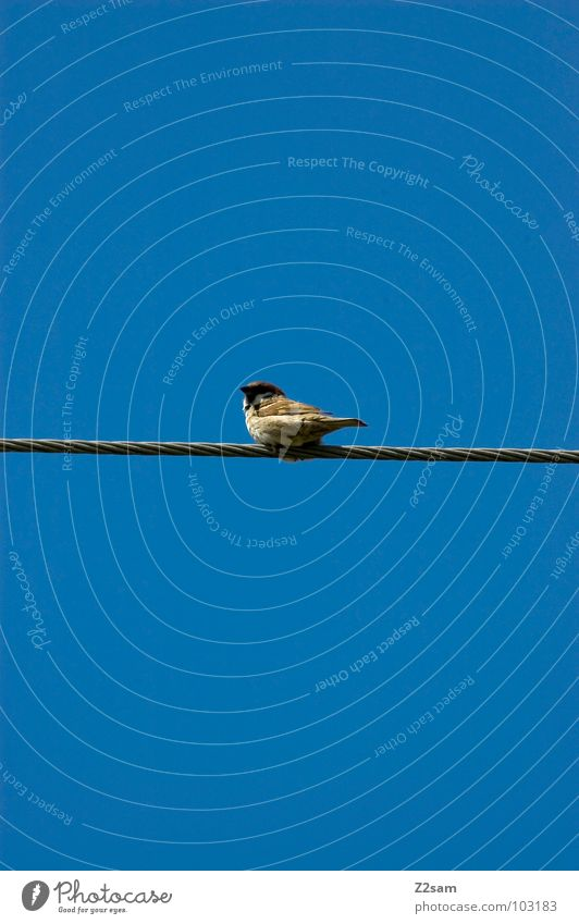 Nature Sky Blue Clouds Animal Contentment Bird Flying Rope Cable Simple Transmission lines Graphic