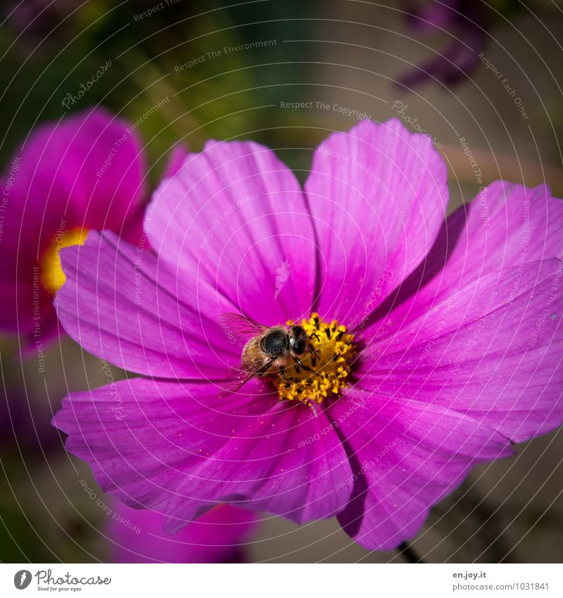 Nature Plant Beautiful Summer Flower Animal Blossom Spring Feasts & Celebrations Pink Work and employment Growth Birthday Happiness Climate Joie de vivre (Vitality)