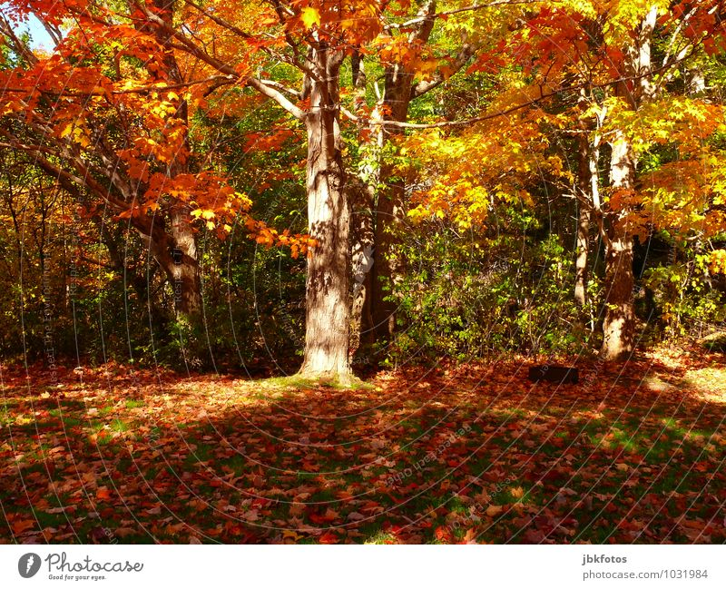 autumn Environment Nature Landscape Sun Plant Tree Garden Park Forest Emotions Joy Happy Happiness Power Sympathy Life Curiosity Hope Autumn Autumn leaves