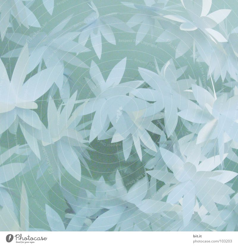 Blue Christmas & Advent Beautiful White Flower Calm Winter Relaxation Cold Snow Blossom Feasts & Celebrations Bright Art Ice Birthday