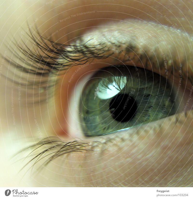 Face Eyes Soft Delicate Eyelash Pupil Iris Organ