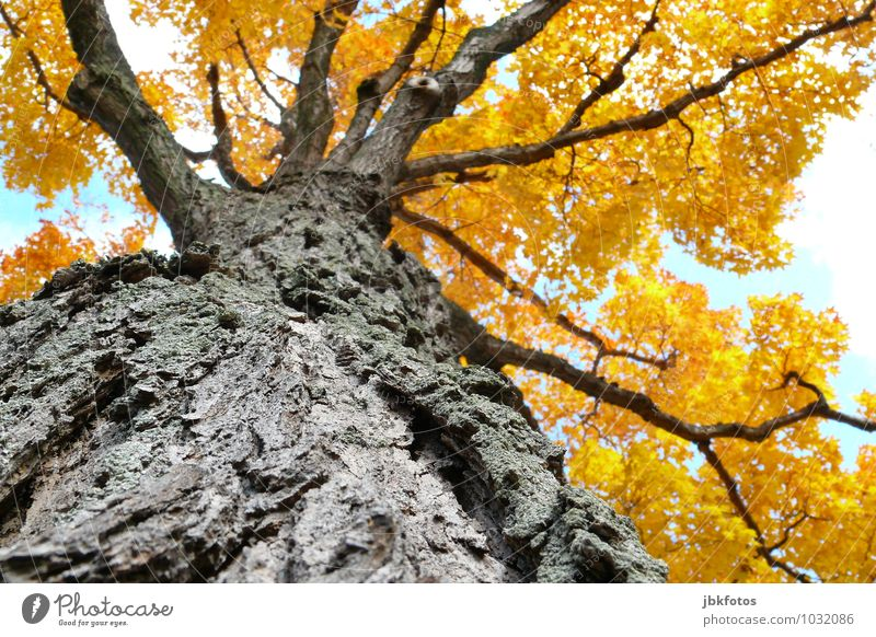 tree of life Landscape Plant Sky Sun Beautiful weather Tree Norway maple Maple tree Maple branch Garden Park Forest Exotic Gigantic Natural Multicoloured Happy